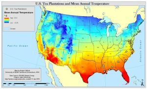 US Plantations and Mean Annual Temperature